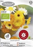 Kuva tuotteesta Nelson Garden Luomu Tarhakehäkukka